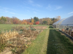 The staff community garden last fall.