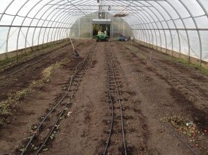 After: Stephanie has been a big help in transitioning the hoophouse from summer to fall. Tomatoes have been replaced with greens, root crops, and scallions.