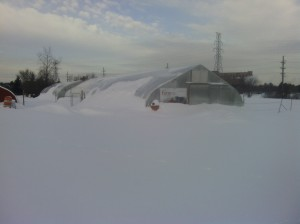 The hoophouses were covered in snow this February.