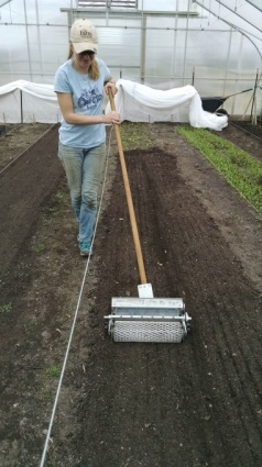 the 6-seeder planting lettuce