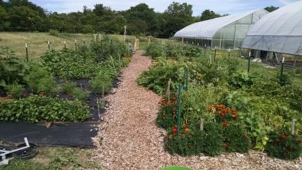 Garden early a 2016