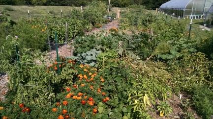 Garden summer 2016 c