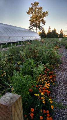 Garden summer 2016 d sunset