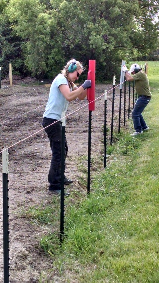 Putting fence posts in-- that is Amanda in the front.