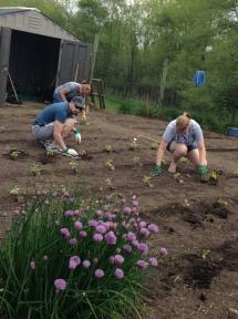 Anas and volunteers planting