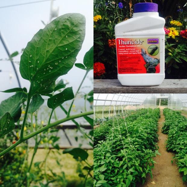 Pesticide Practices