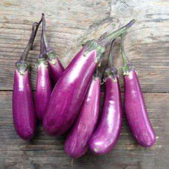 EggplantPic