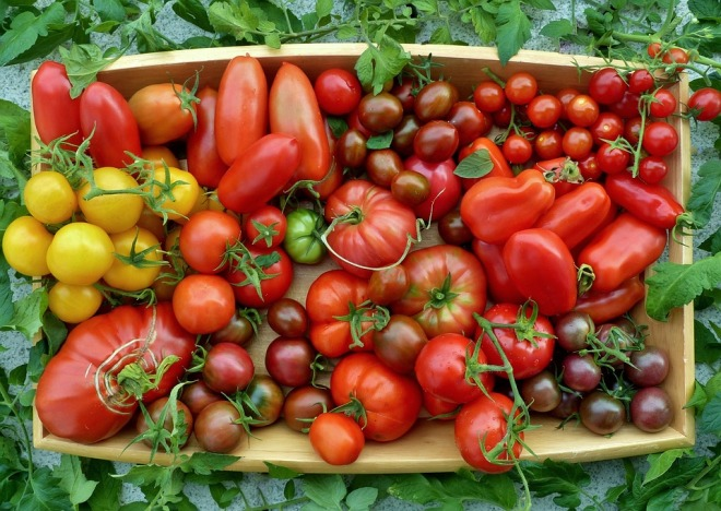 Tomatoes Locations Tomato Selection